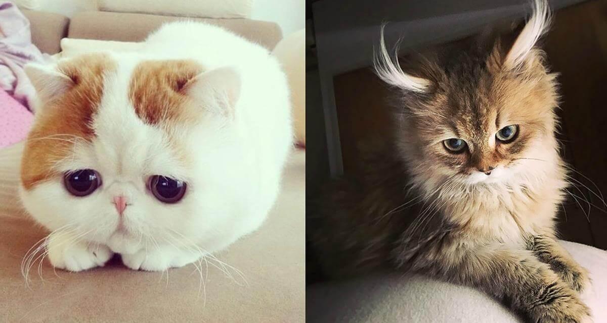Подборка милых котов и кошек в картинках 3
