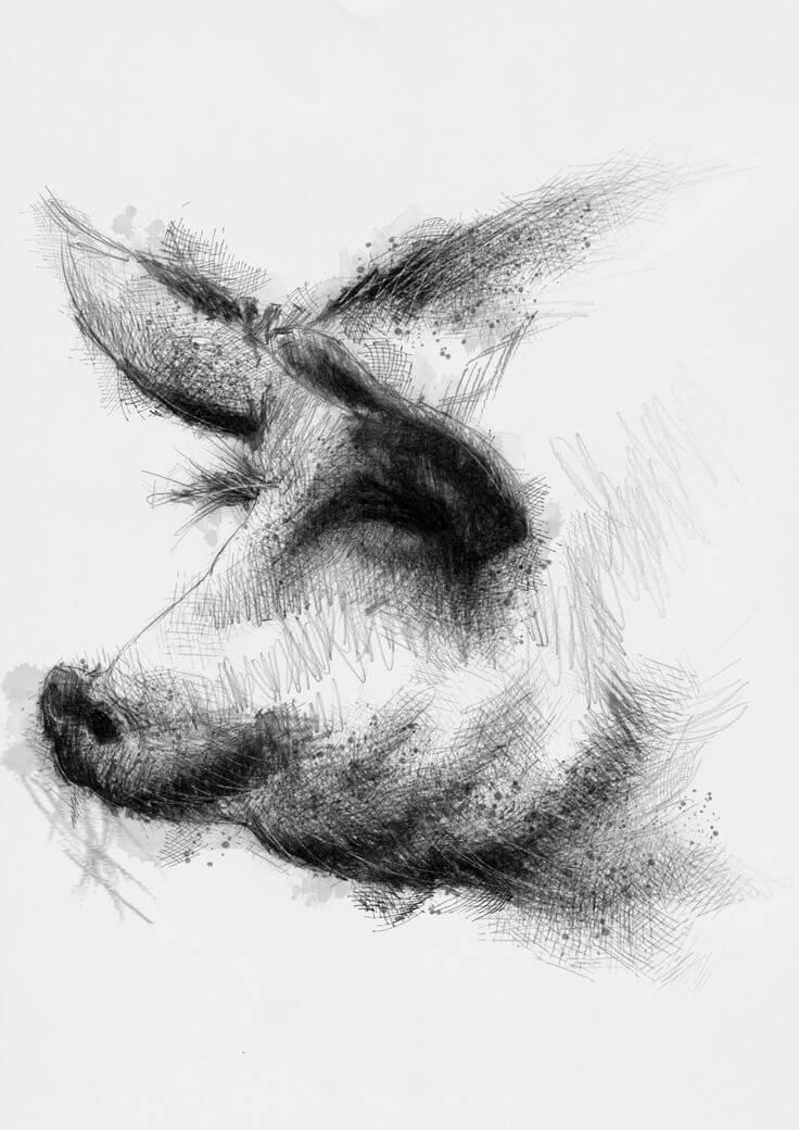 Прикольные картинки свиньи для срисовки - подборка 3