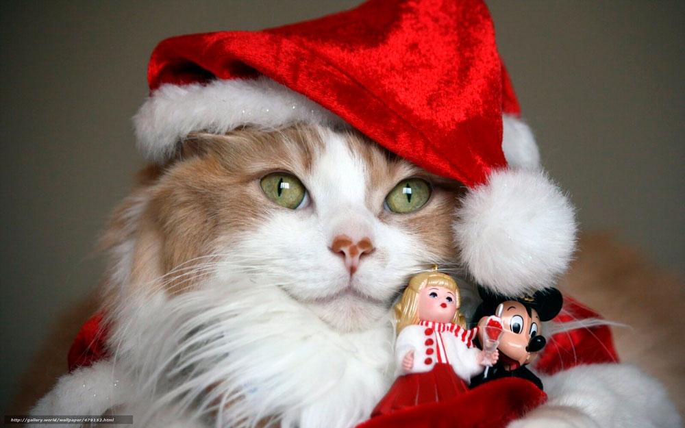 Кошки, котята, коты картинки в новый год - самые красивые 20