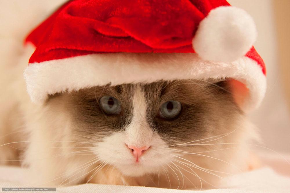 Кошки, котята, коты картинки в новый год - самые красивые 19