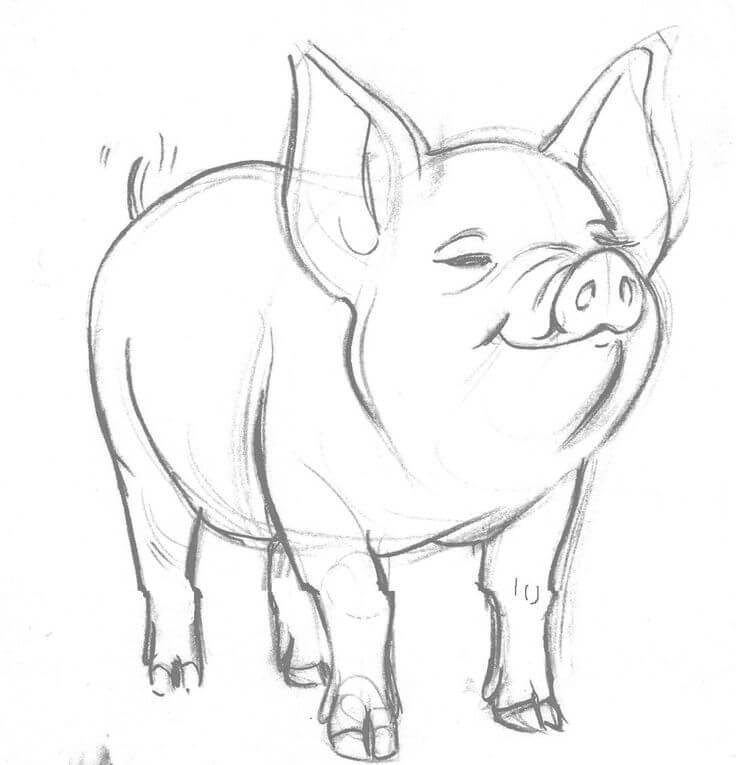 Прикольные картинки свиньи для срисовки - подборка 5