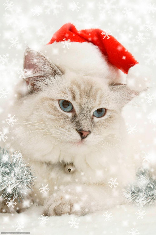 Кошки, котята, коты картинки в новый год - самые красивые 17
