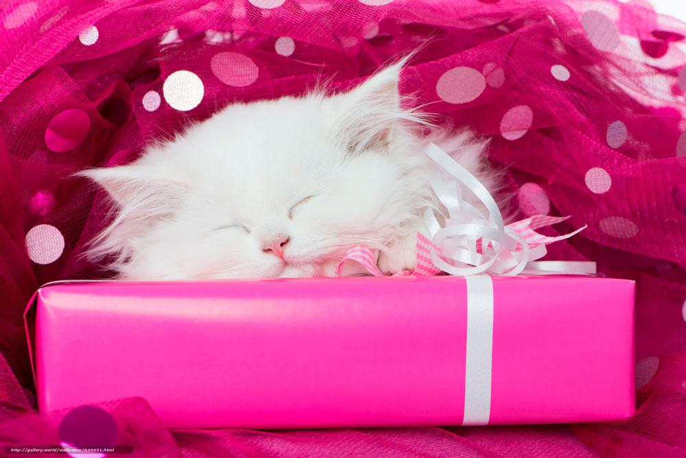 Кошки, котята, коты картинки в новый год - самые красивые 16