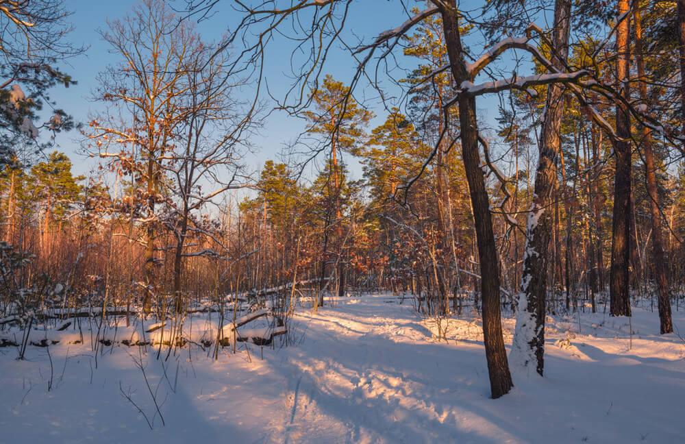 Зимнее настроение - фото и картинки красивые, приятные 2