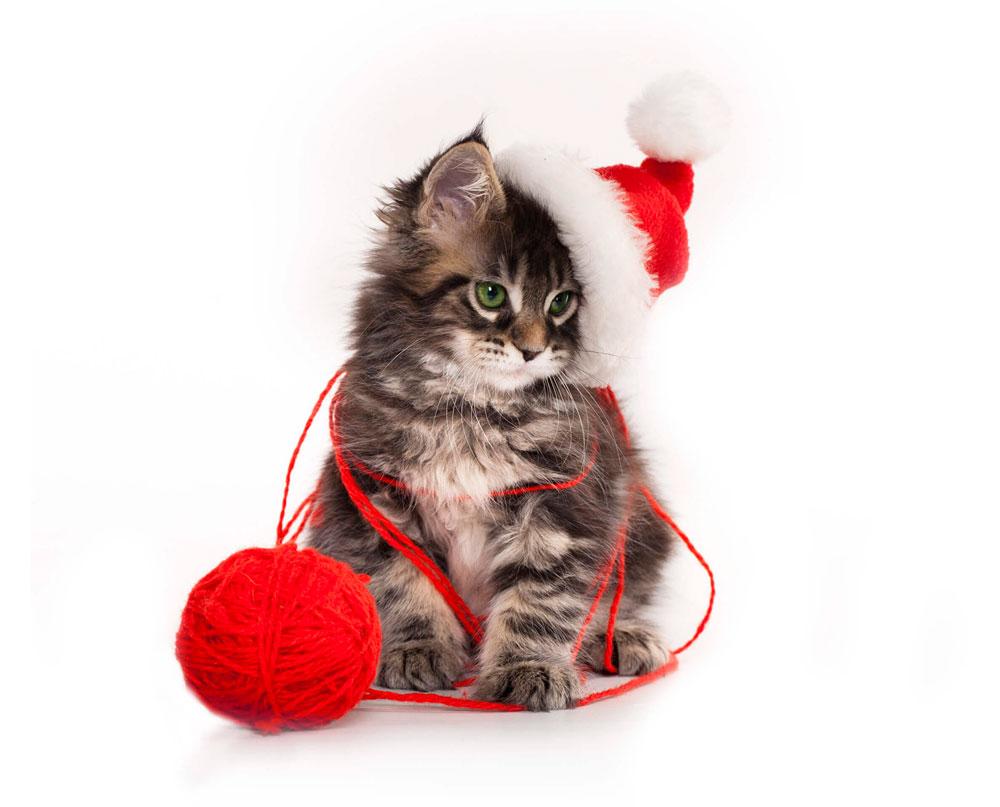 Кошки, котята, коты картинки в новый год - самые красивые 15