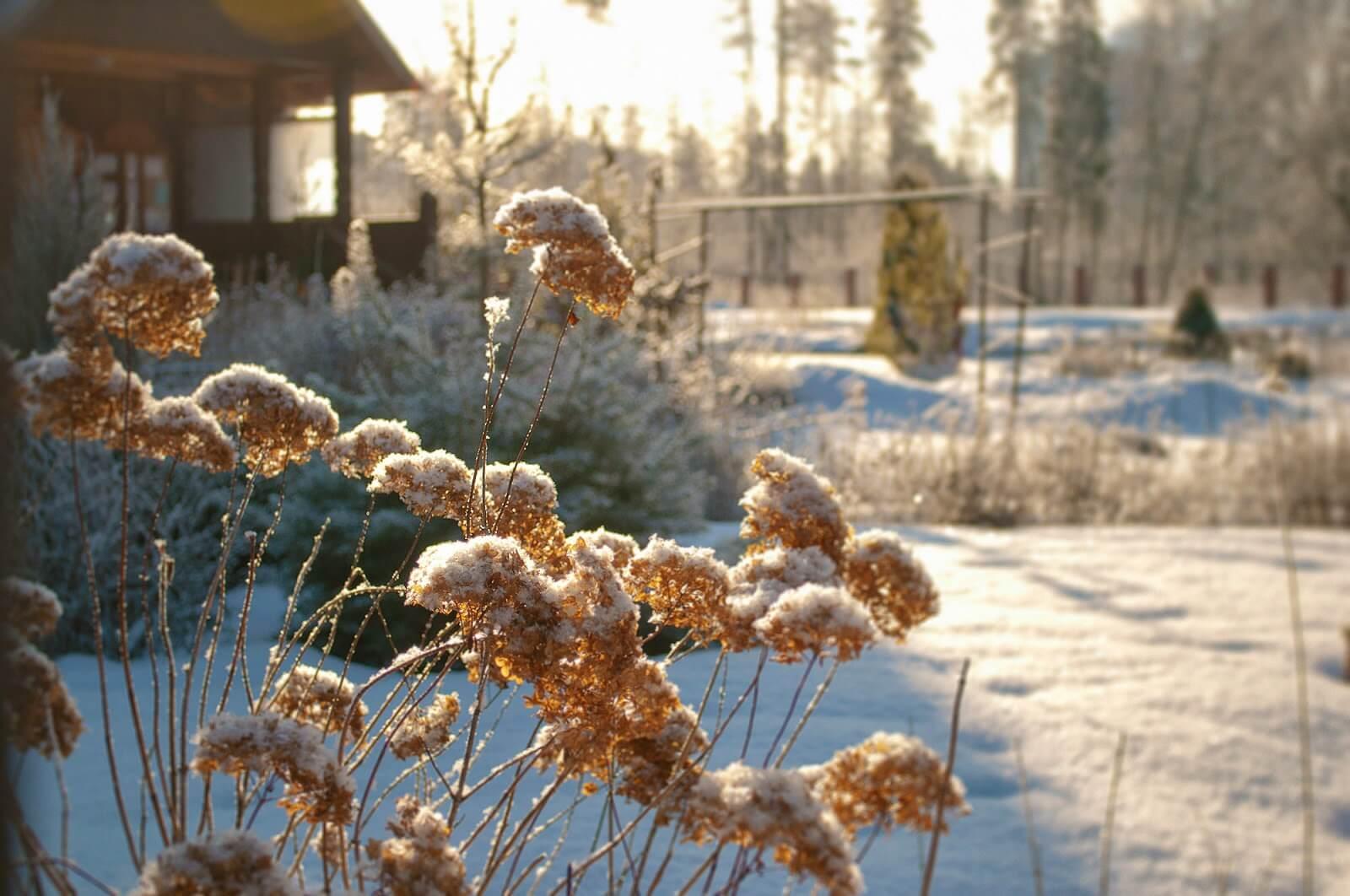 Зимнее настроение - фото и картинки красивые, приятные 9