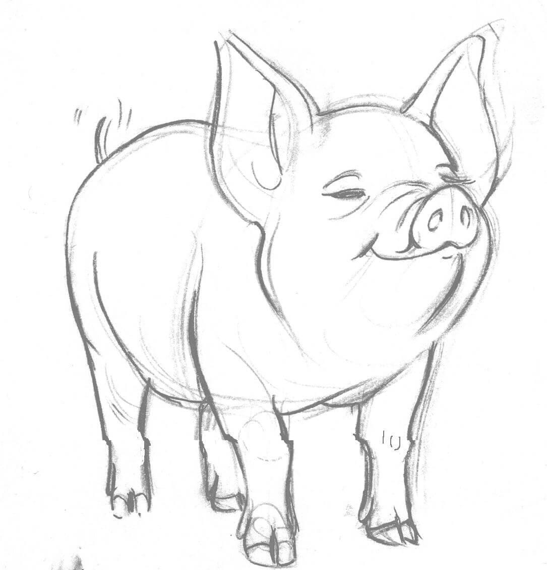 Прикольные картинки свиньи для срисовки - подборка 20