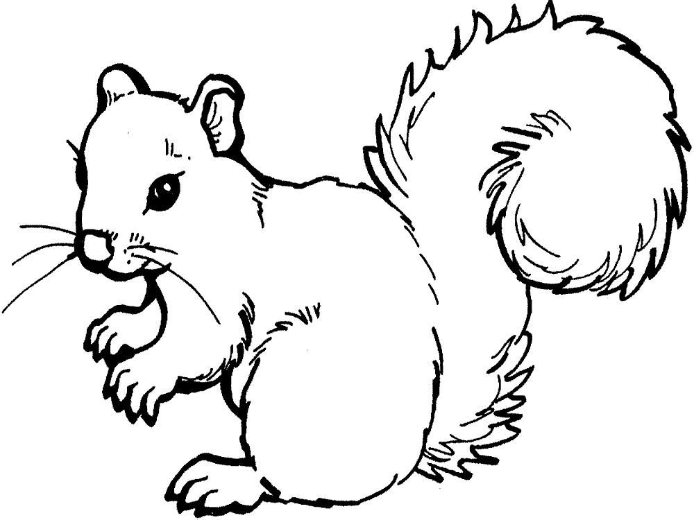 Простые раскраски животных для детей и малышей 26