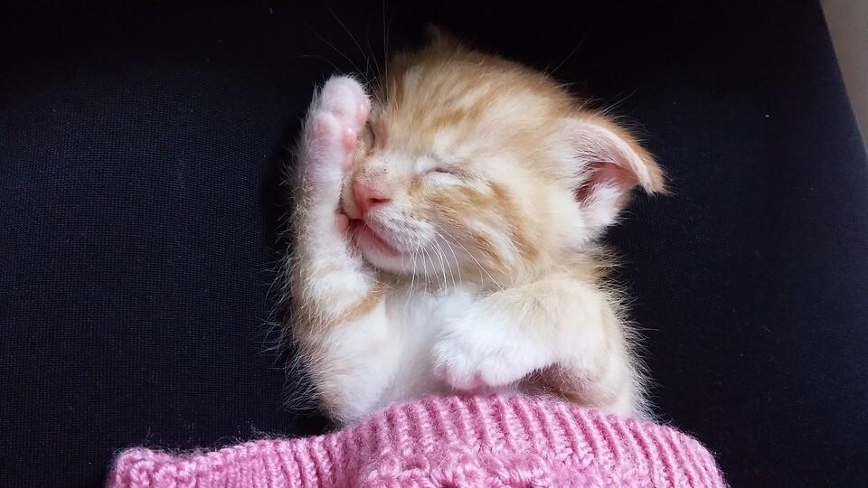 Картинки спящих котов и котиков - самые милые 3