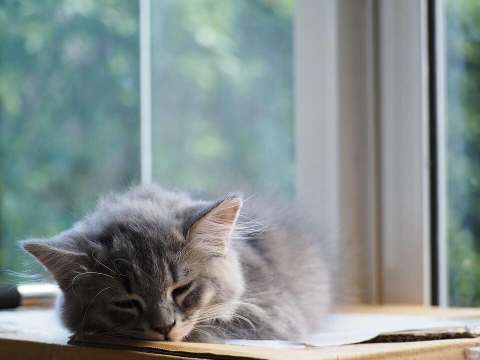 Картинки спящих котов и котиков - самые милые 4