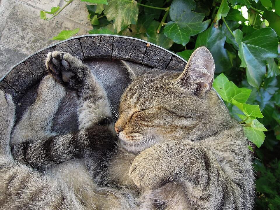 Картинки спящих котов и котиков - самые милые 5