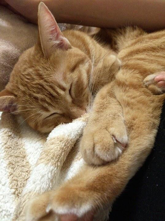Картинки спящих котов и котиков - самые милые 6