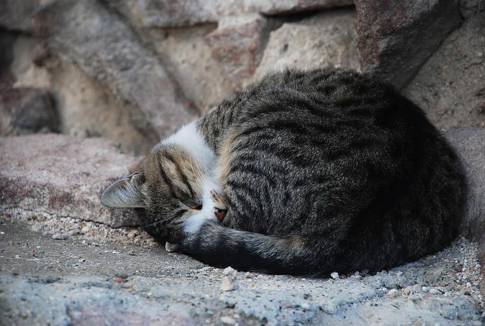 Картинки спящих котов и котиков - самые милые 7
