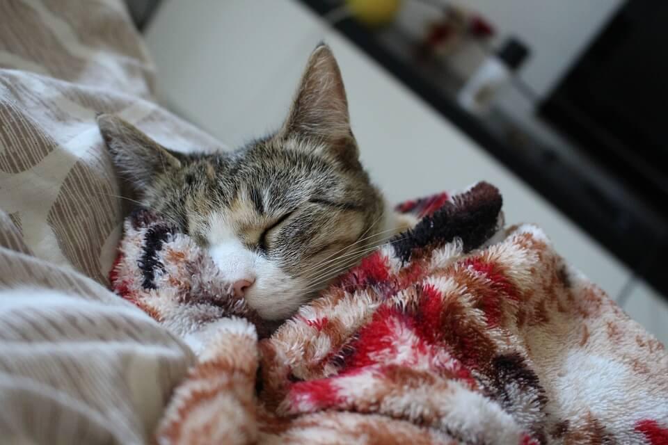 Картинки спящих котов и котиков - самые милые 8