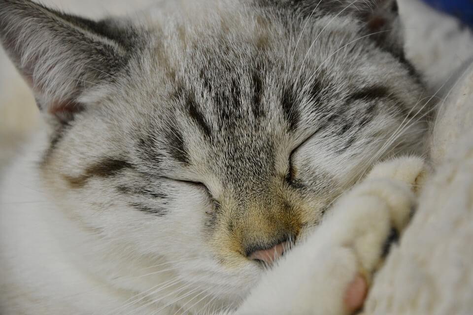 Картинки спящих котов и котиков - самые милые 11