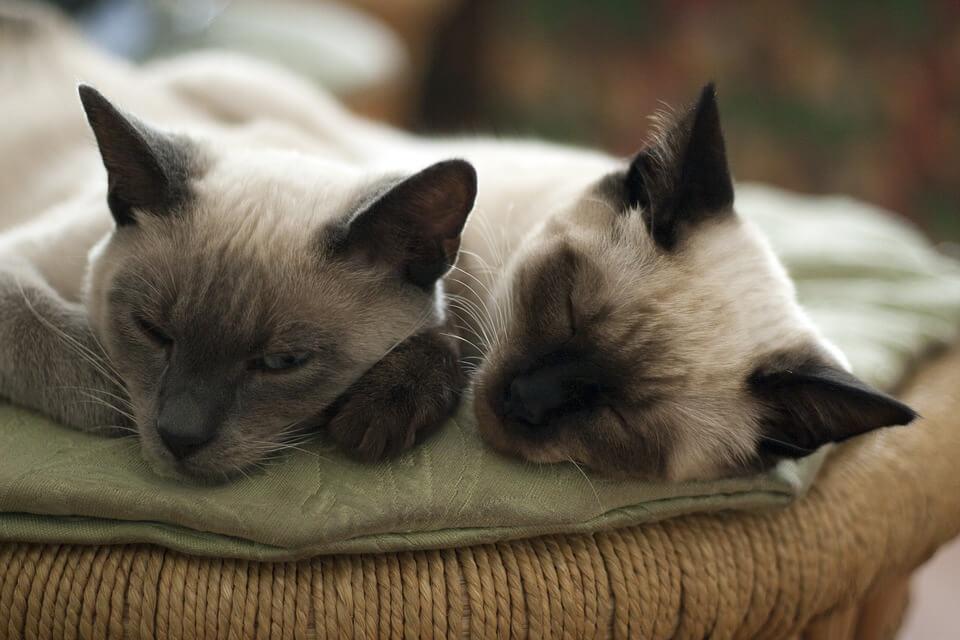 Картинки спящих котов и котиков - самые милые 9