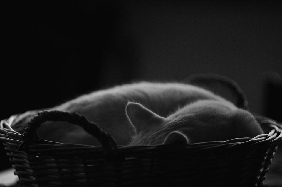 Картинки спящих котов и котиков - самые милые 10
