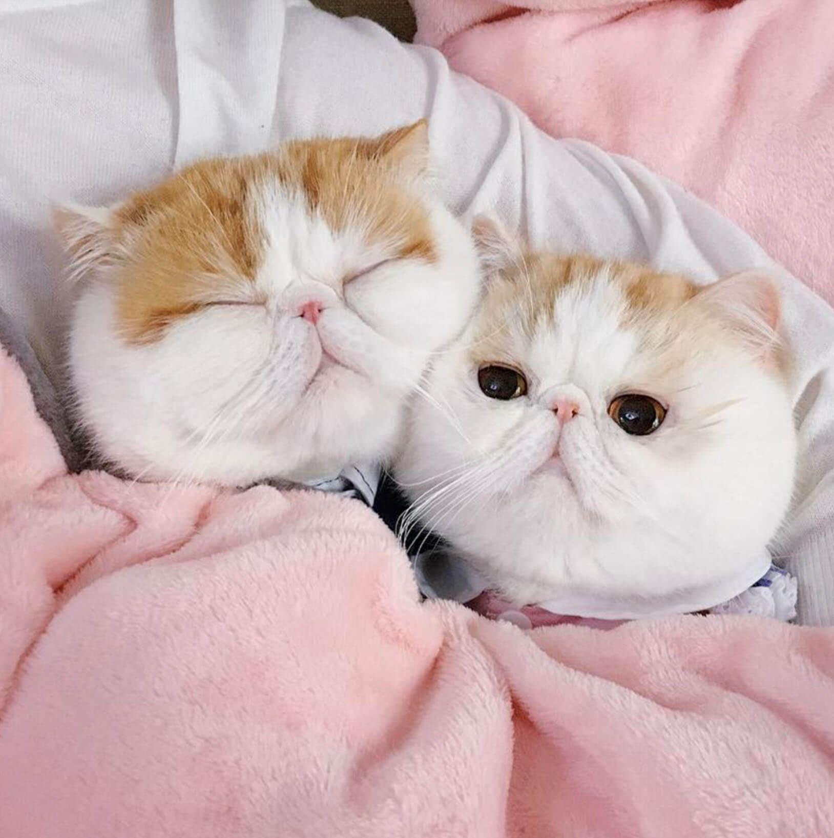 Подборка милых котов и кошек в картинках 9