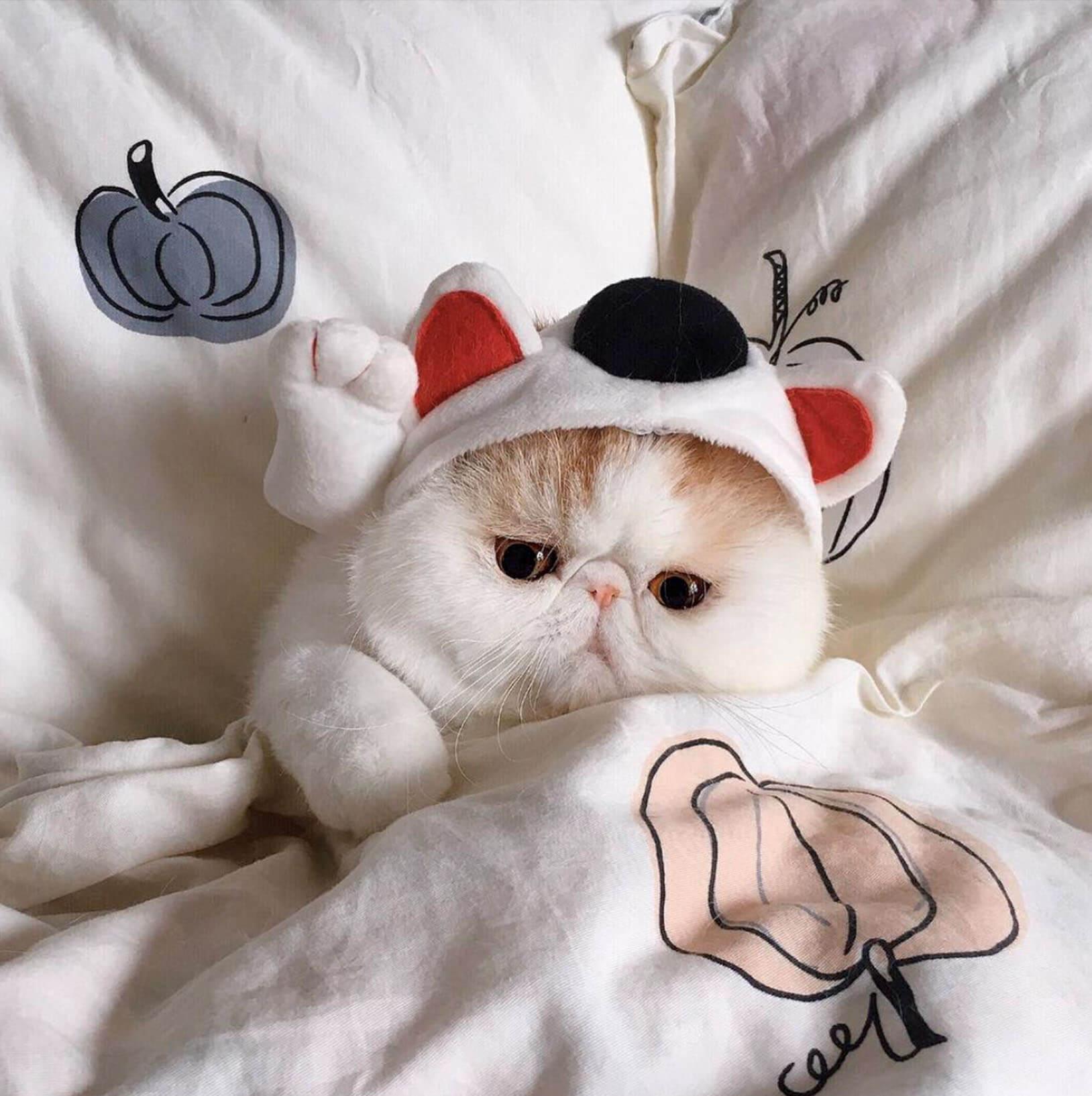 Подборка милых котов и кошек в картинках 10