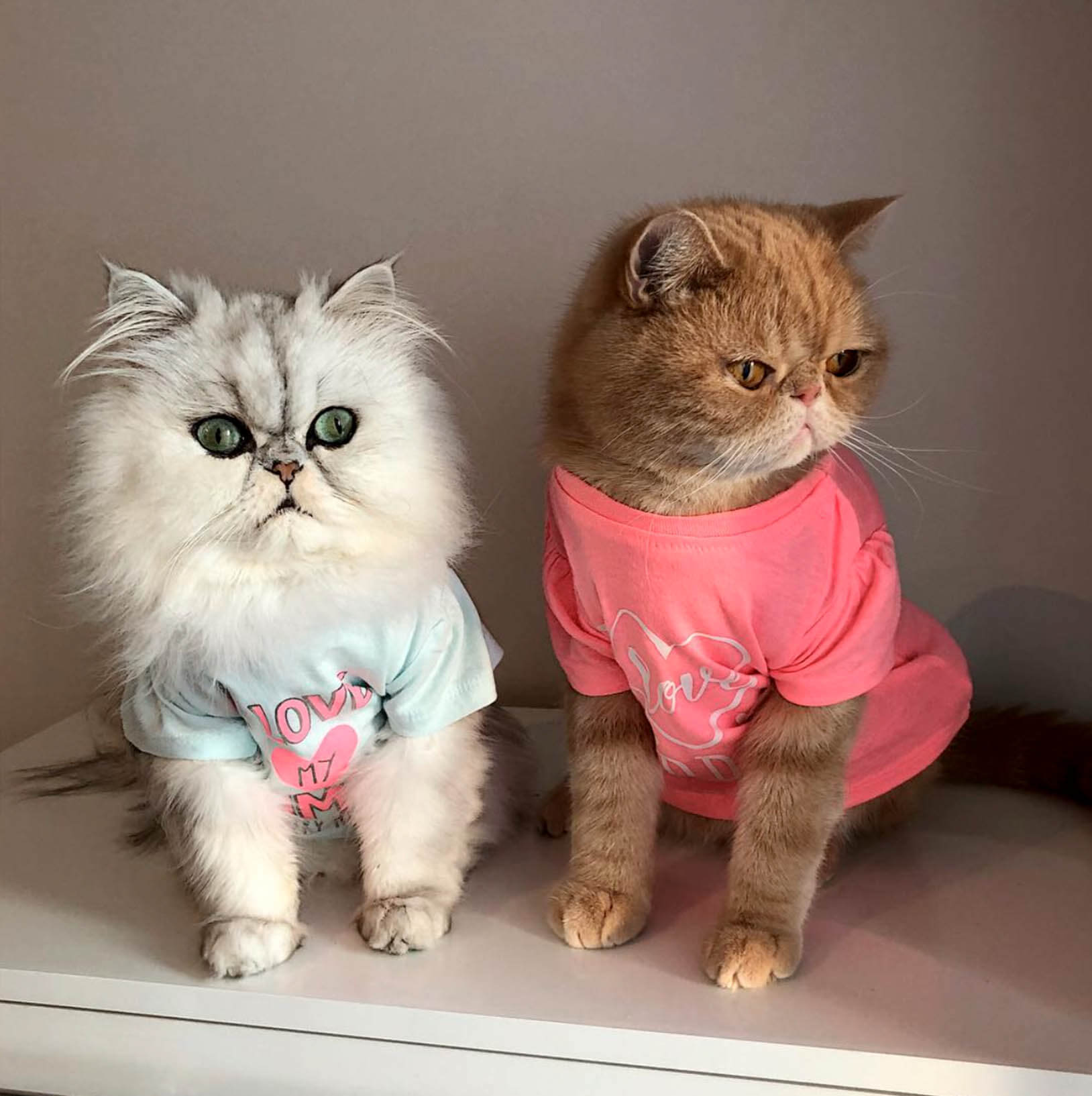 Подборка милых котов и кошек в картинках 4