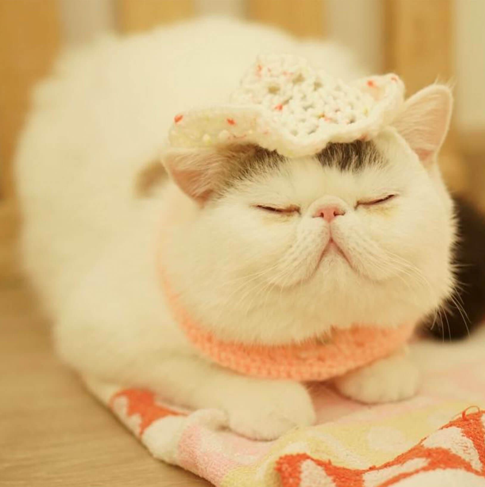 Подборка милых котов и кошек в картинках 5
