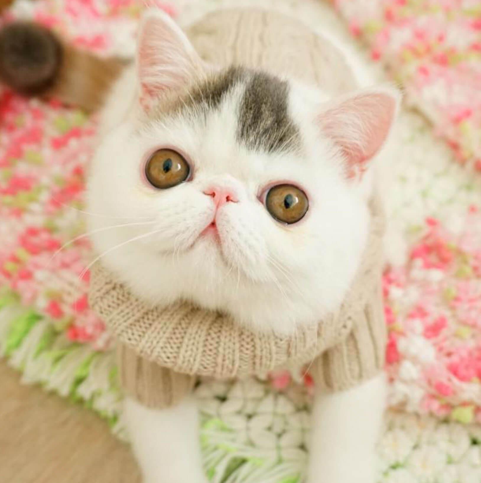 Подборка милых котов и кошек в картинках 6