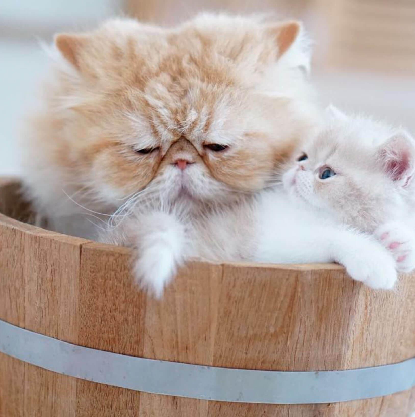Подборка милых котов и кошек в картинках 7
