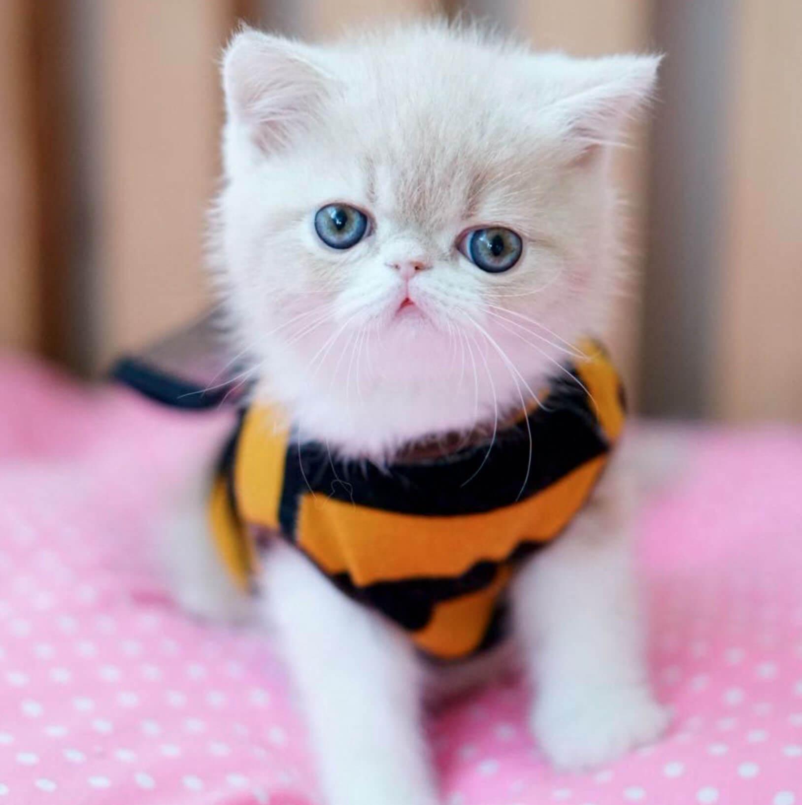 Подборка милых котов и кошек в картинках 8