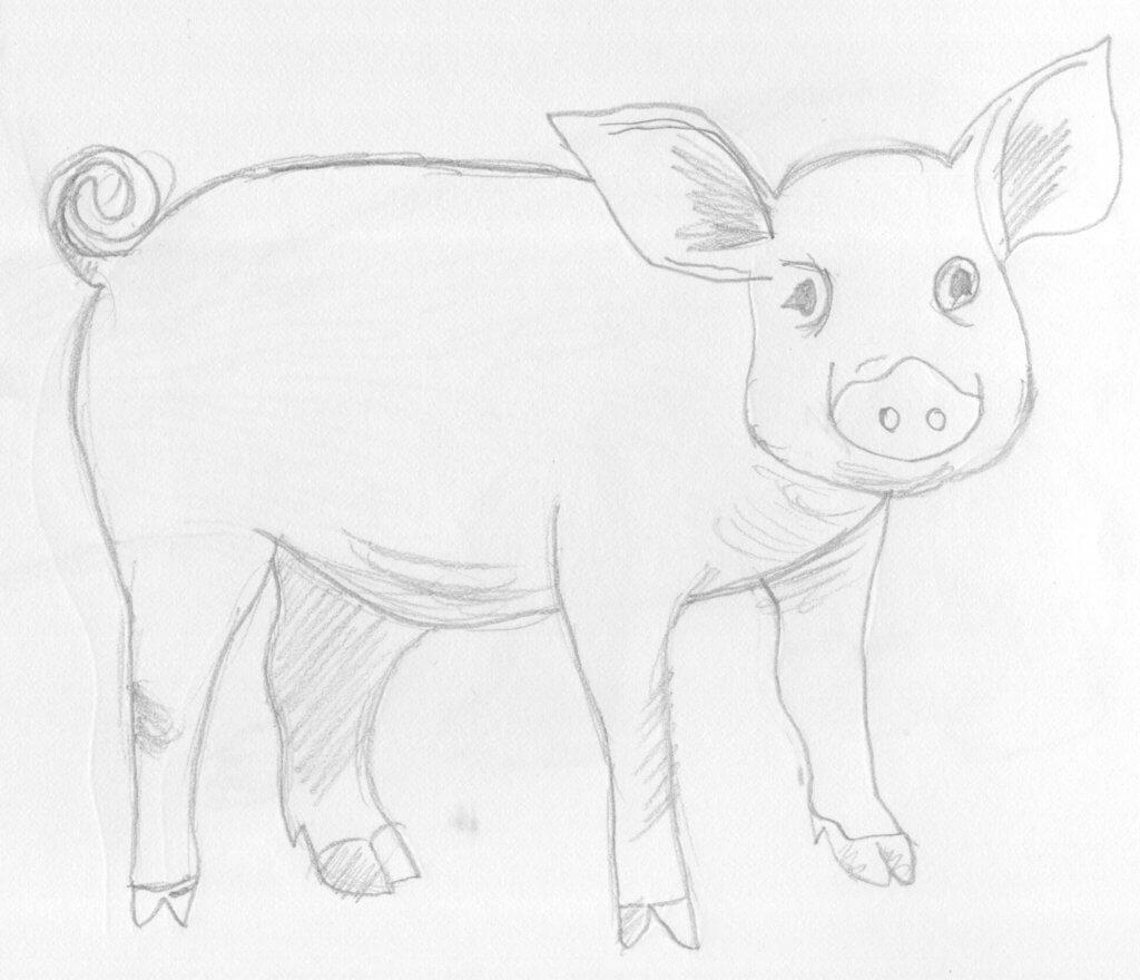 Прикольные картинки свиньи для срисовки - подборка 14