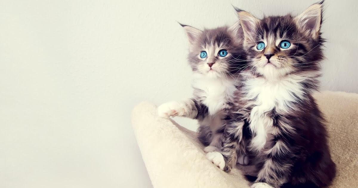 Подборка милых котов и кошек в картинках 12