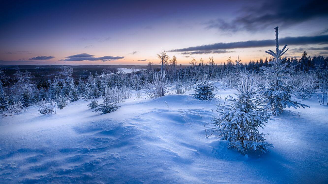 Скачать обои зимних картинок на телефон для заставки 5