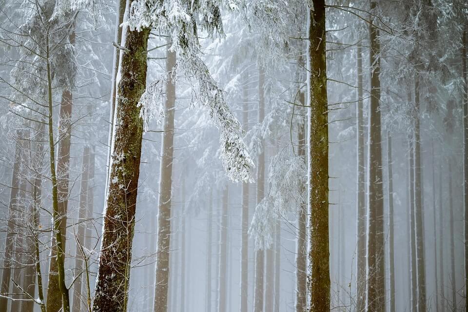Красивые и невероятные картинки Зимний лес - подборка 1