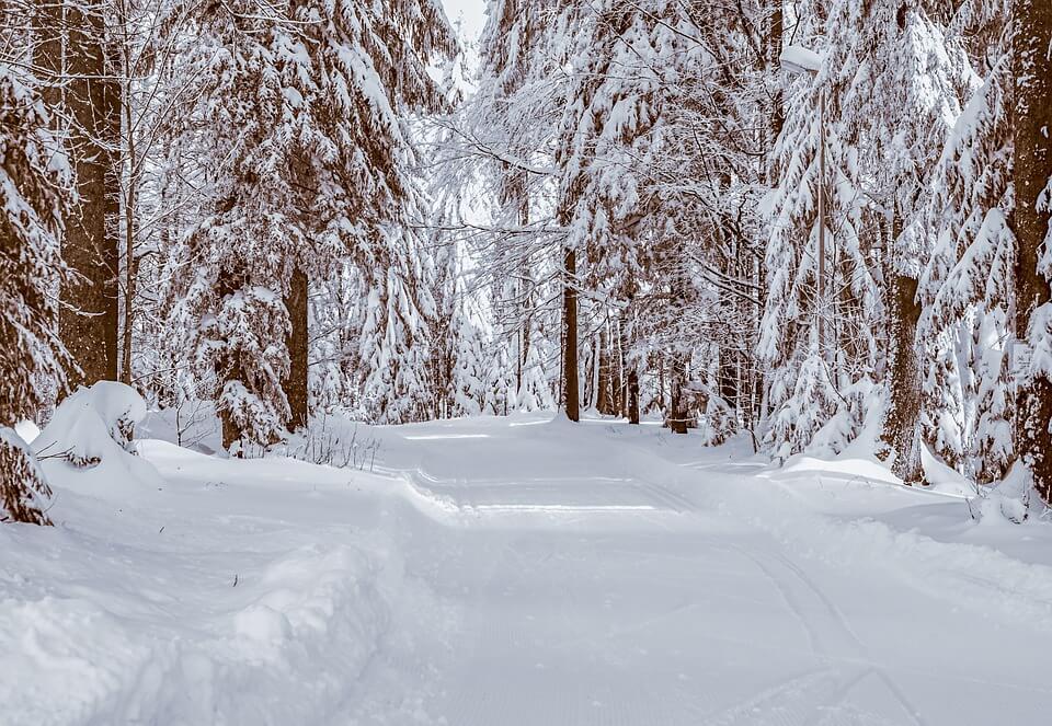 Красивые и невероятные картинки Зимний лес - подборка 2