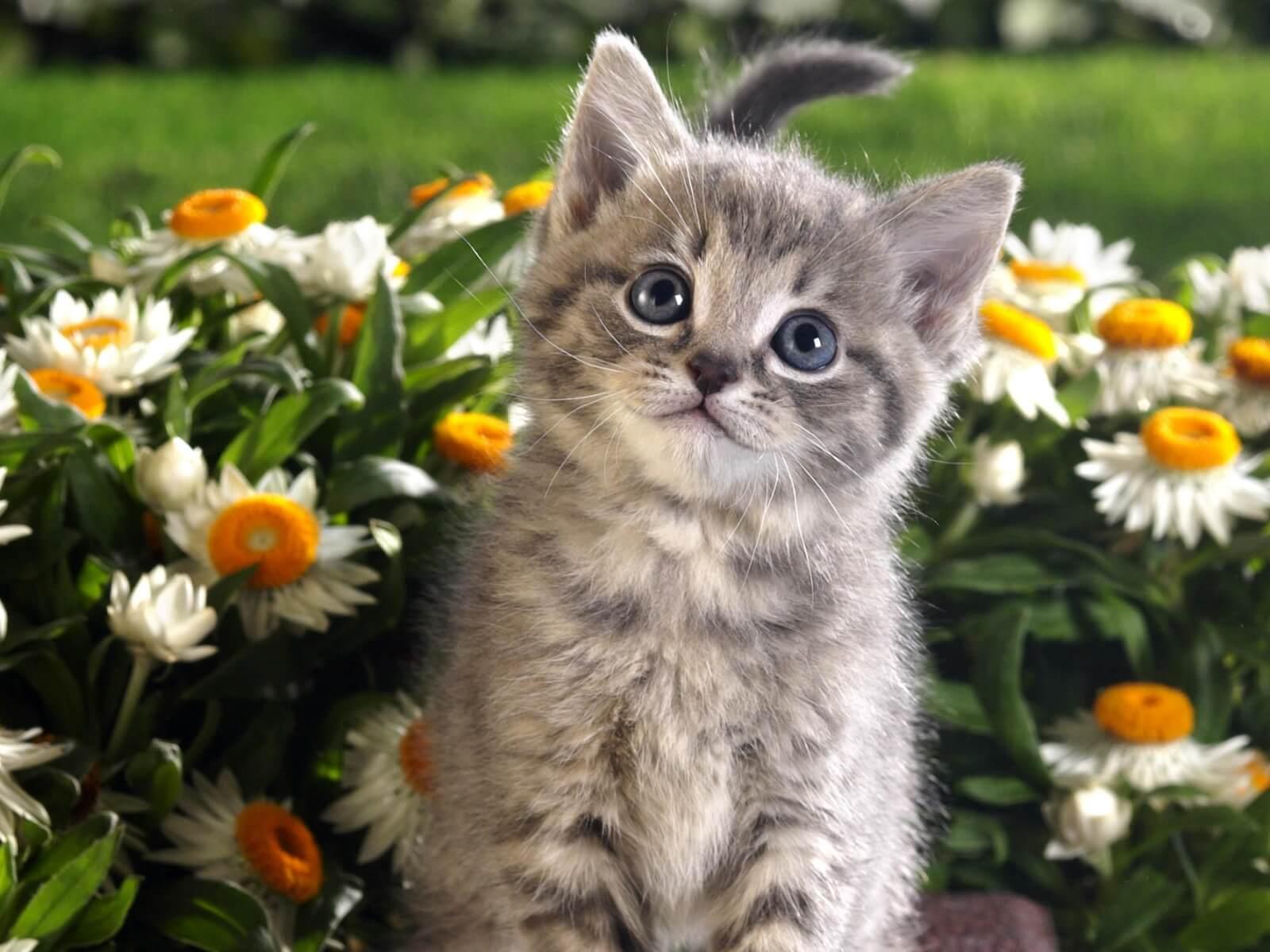 Подборка милых котов и кошек в картинках 13
