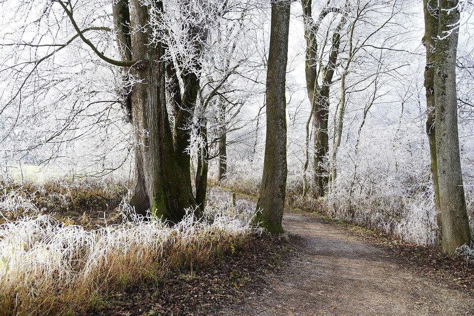 Красивые и невероятные картинки Зимний лес - подборка 3