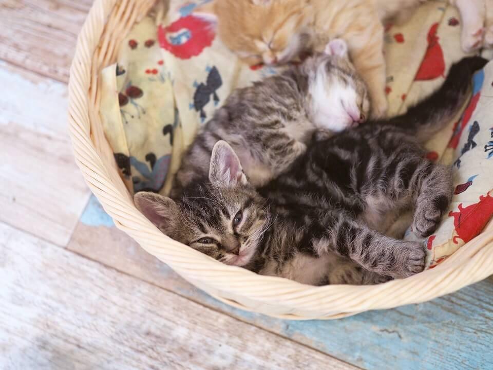 Картинки спящих котов и котиков - самые милые 12