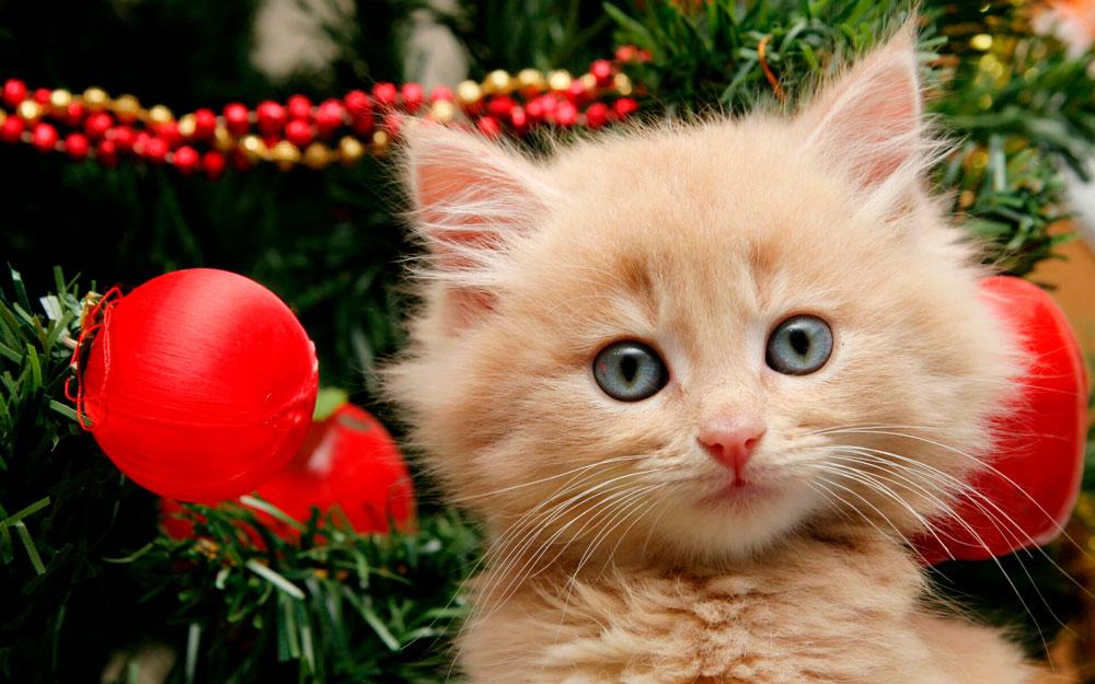 Кошки, котята, коты картинки в новый год - самые красивые 10
