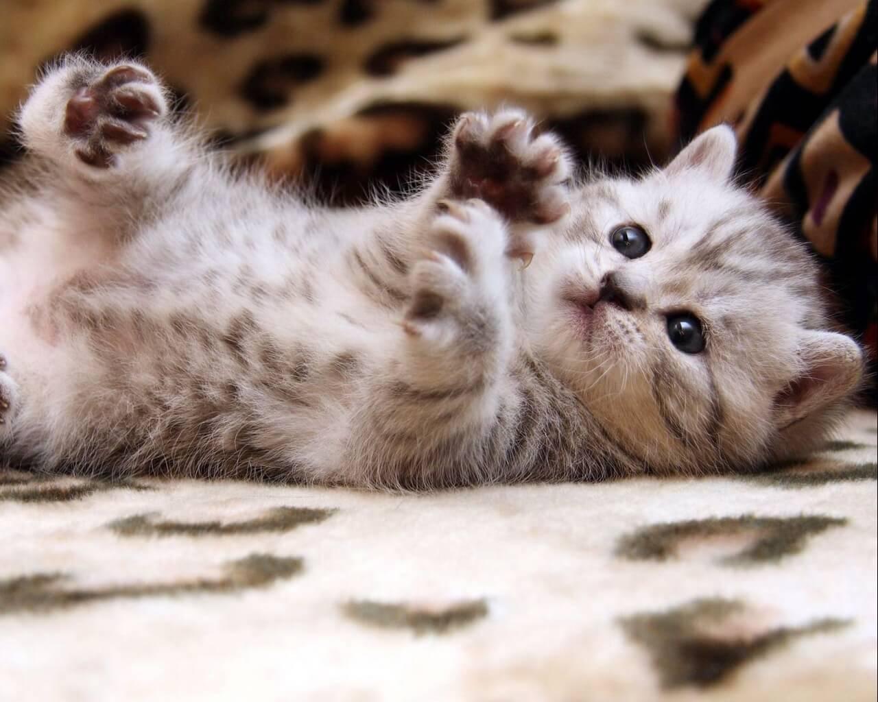 Подборка милых котов и кошек в картинках 14