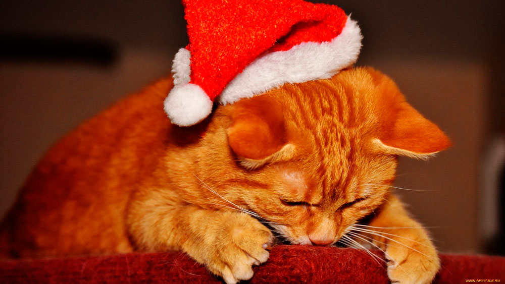 Кошки, котята, коты картинки в новый год - самые красивые 9