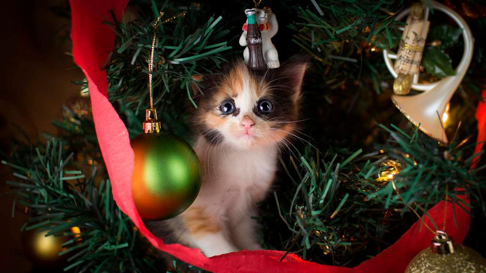Кошки, котята, коты картинки в новый год - самые красивые 8