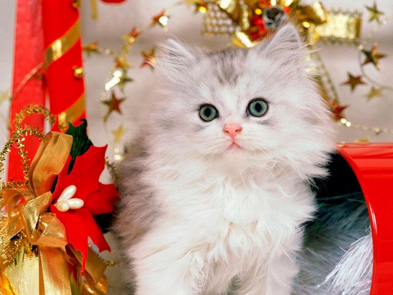 Кошки, котята, коты картинки в новый год - самые красивые 7
