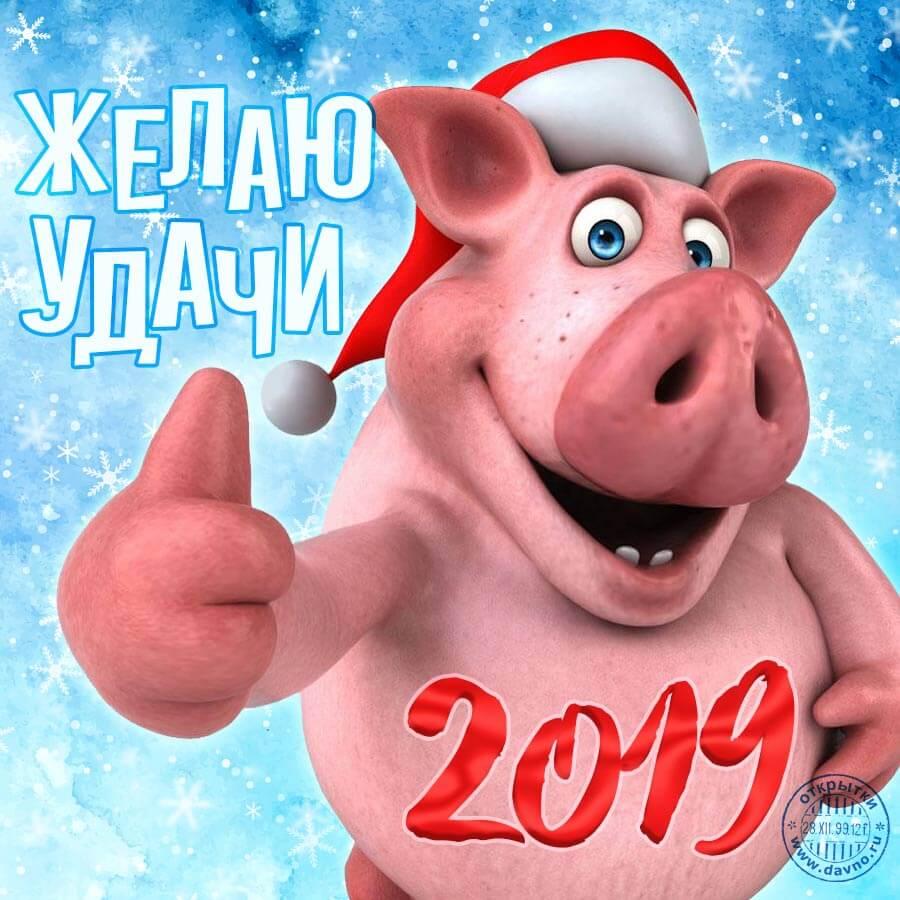 Картинки и открытки поздравления с Новым годом свиньи 2019 12