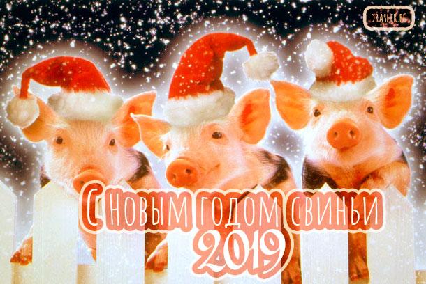 Красивые картинки с Новым годом свиньи 2019 - поздравления 15