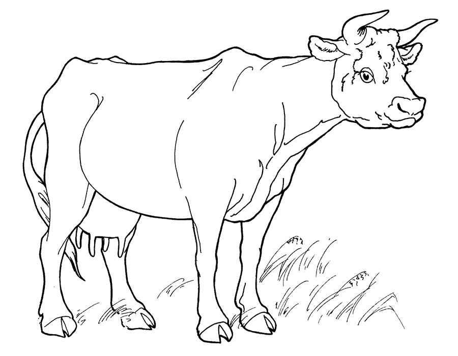 Простые раскраски животных для детей и малышей 23
