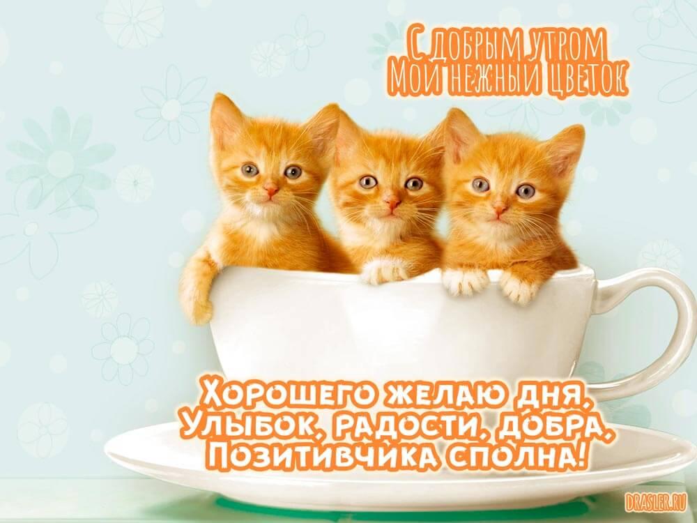 Ласковое доброе утро девушке в картинках и открытках 14