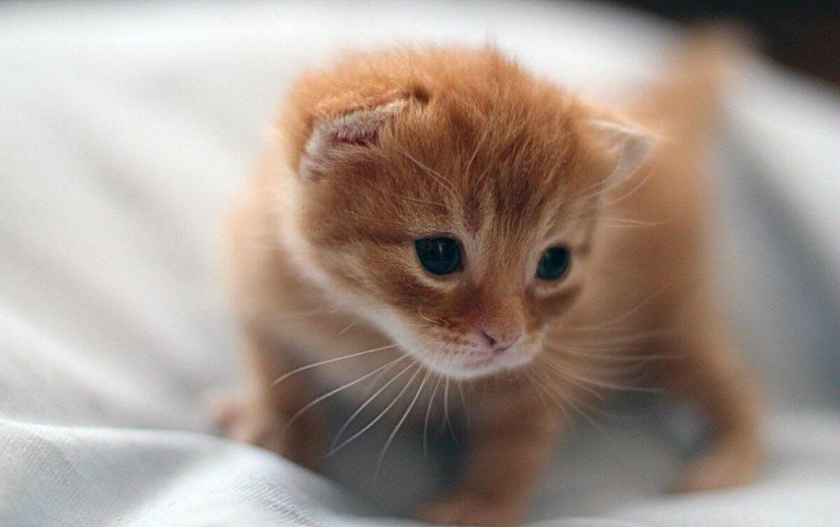 Подборка милых котов и кошек в картинках 26