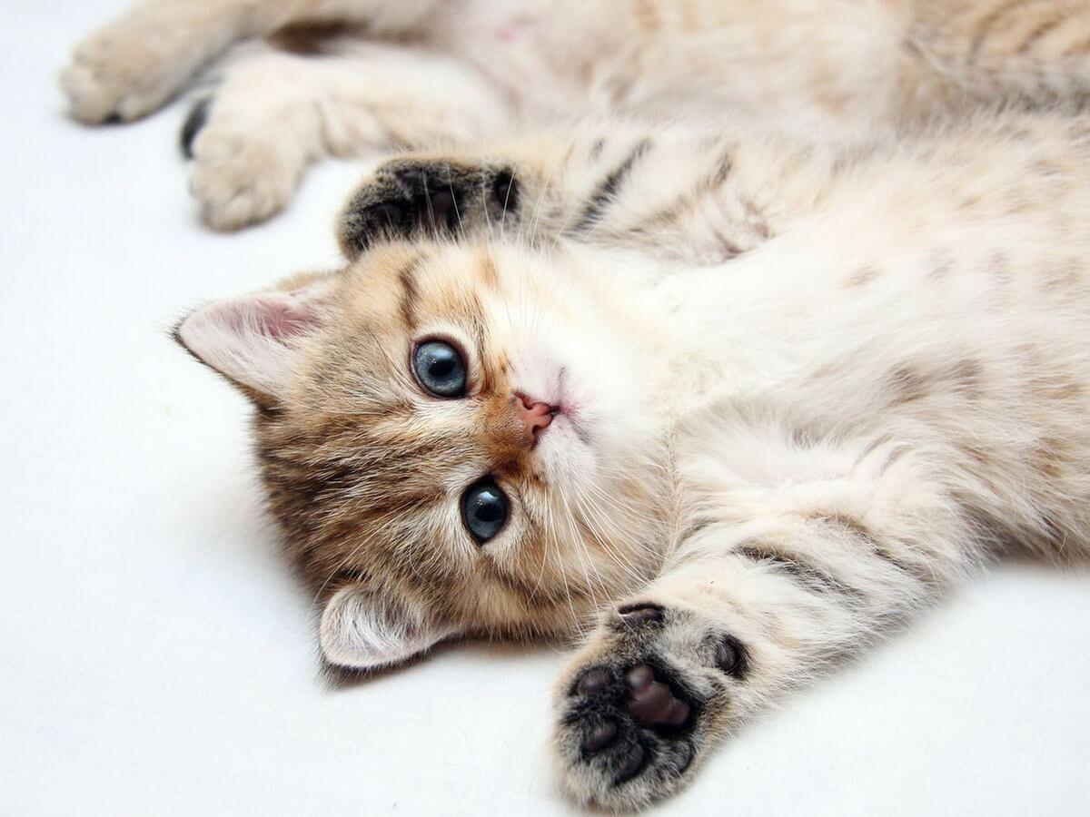 Подборка милых котов и кошек в картинках 27
