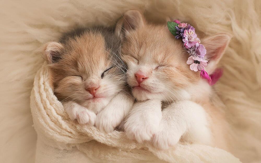 Подборка милых котов и кошек в картинках 28