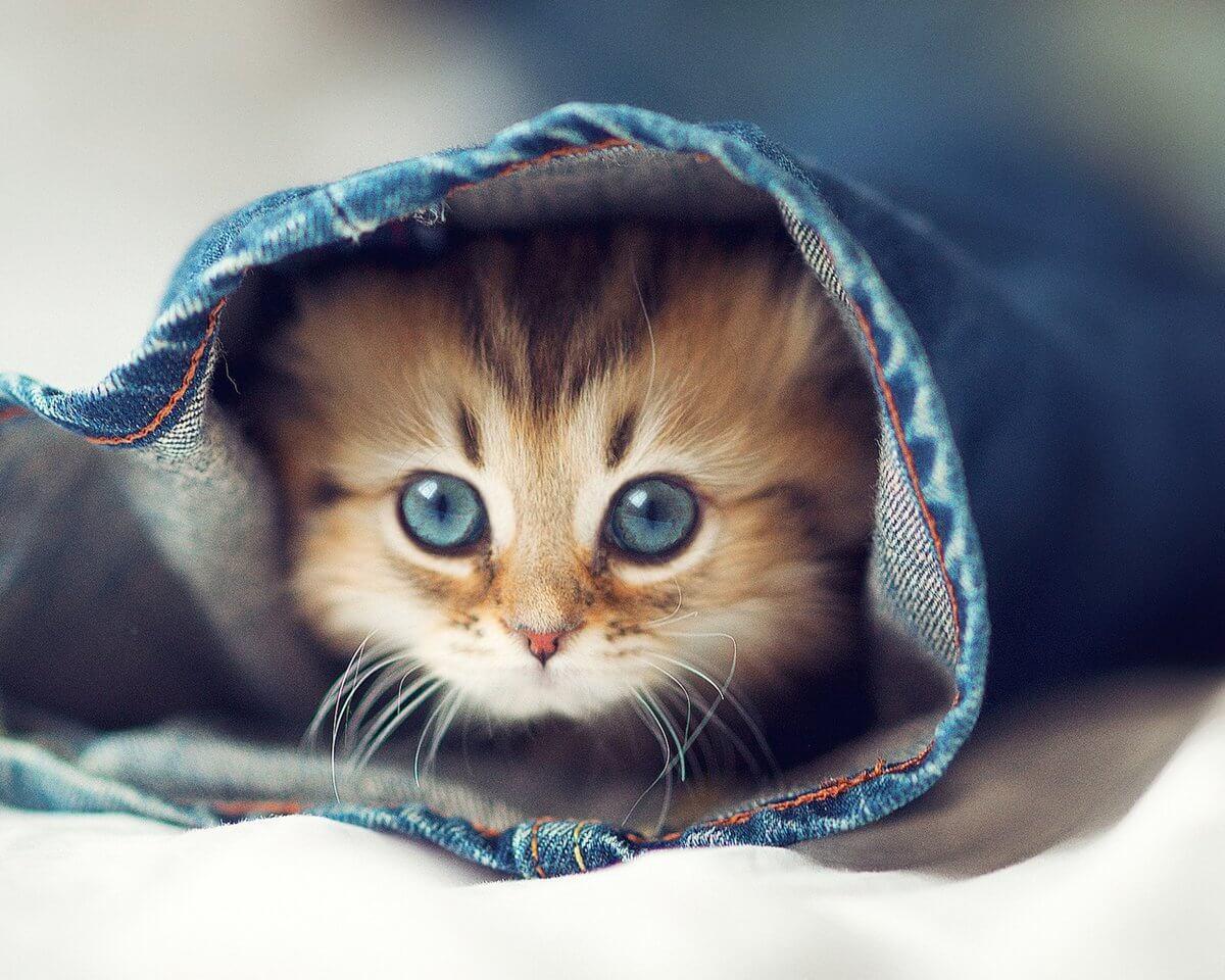 Подборка милых котов и кошек в картинках 29
