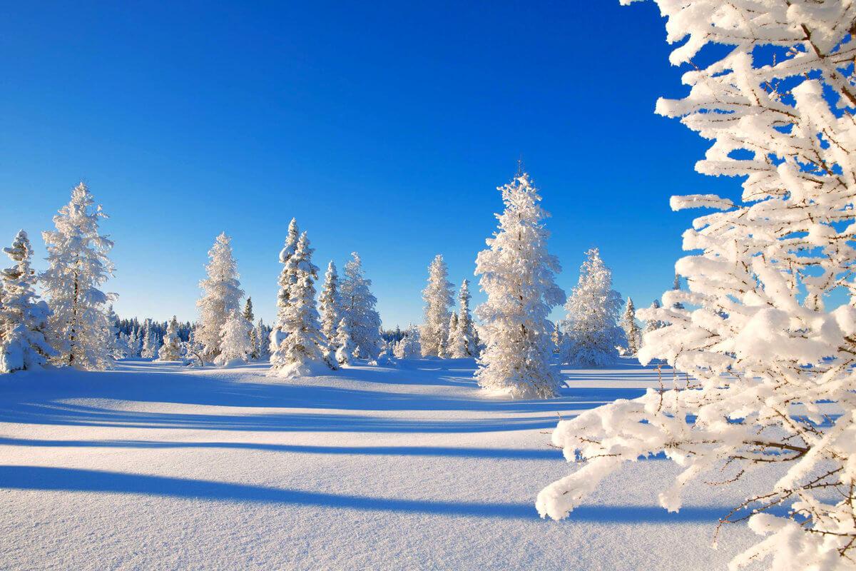 Скачать обои зимних картинок на телефон для заставки 10